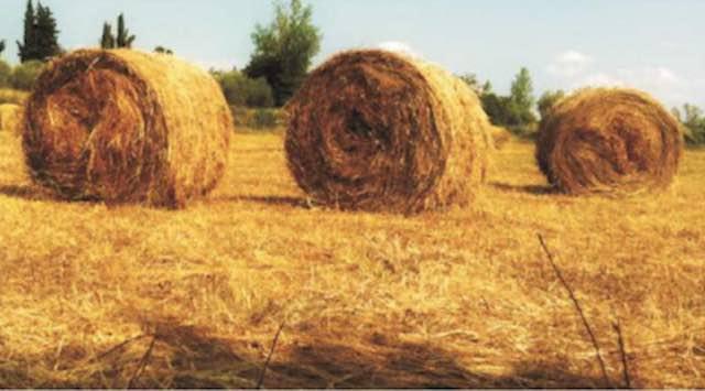 Partenariato tra Allerona e Castel Viscardo per la promozione di prodotti agro alimentari filiera corta