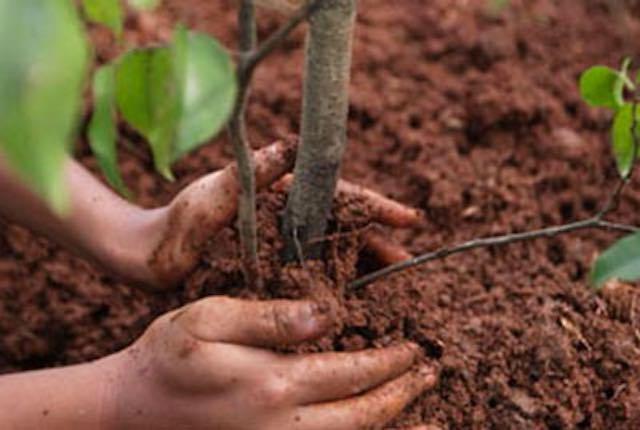 Un albero ogni neonato. Sì del consiglio comunale all'incremento del verde urbano