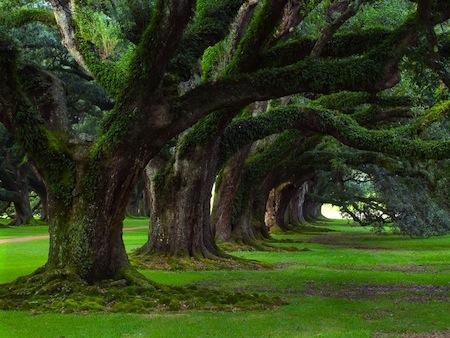 Gli alberi più belli dell'Umbria mettono radici sul portale regionale