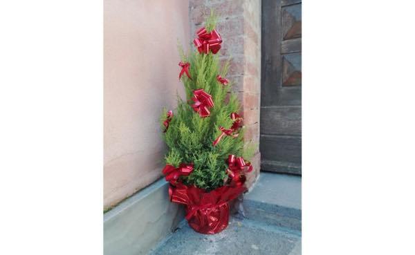 Manifestazione d'interesse per la messa a dimora di 53 piccoli alberi in vaso