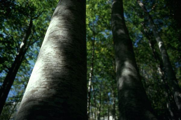 """""""Per la prima volta, un database unico sull'età degli alberi più vecchi d'Europa"""""""