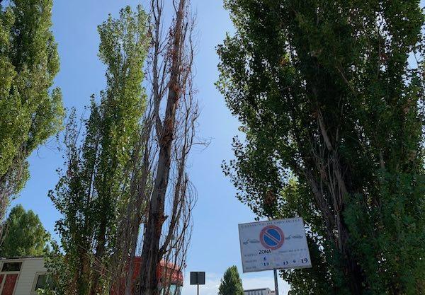 Piazza della Pace, piante ammalorate e un pozzetto non segnalato nell'area camper