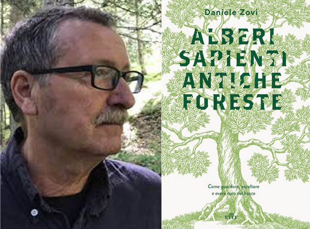 """""""Alberi sapienti, antiche foreste. Come guardare, ascoltare e avere cura del bosco"""""""