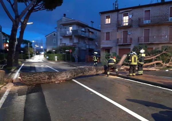 Chiusa al traffico Via Panaro per abbattimento e smaltimento dei tagli degli alberi d'alto fusto