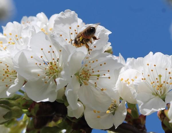 Oltre 80.000 visitatori alla mostra fotograficadedicata al problema dell'estinzione delle api