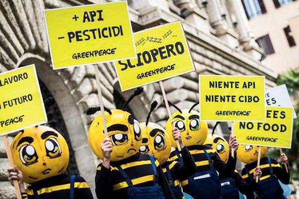 """""""Le api stanno morendo, l'apicoltura rischia di scomparire"""""""