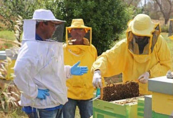 Corso di avvio all'apicoltura finalizzato alla gestione dell'Apiario di Comunità