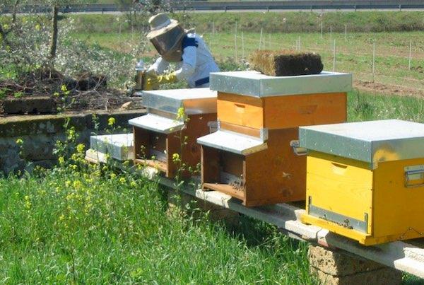 """""""Save the Queen Bee"""". Corso pratico per l'allevamento di Api Regine"""