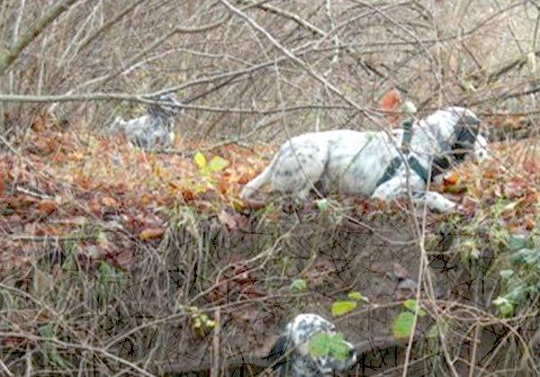 Unitus, il Dafne avvia il monitoraggio della fauna