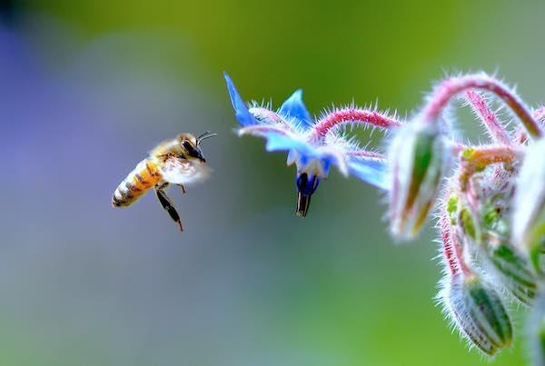 """""""Miele, api e biodiversità nelle tradizioni rurali della Valle dei Calanchi"""""""
