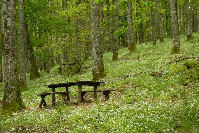 """""""Allerona Petit Tour"""" torna nei boschi della Selva di Meana"""