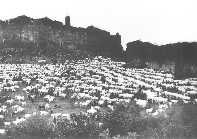 """""""Al Campo della Fiera"""", rivive la tradizione con la Festa della Trebbiatura e del Bestiame"""