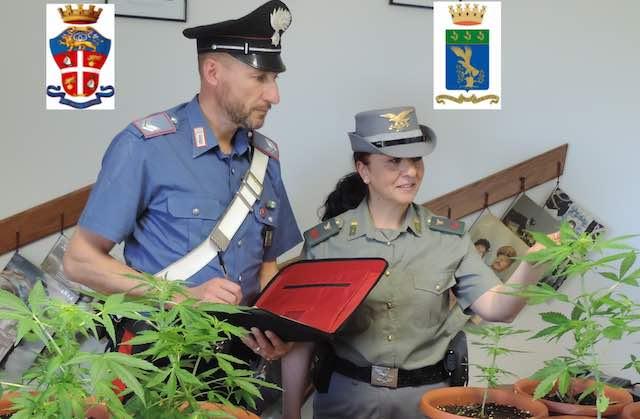 Coltivavano erba a Corbara, denunciati due giovani orvietani