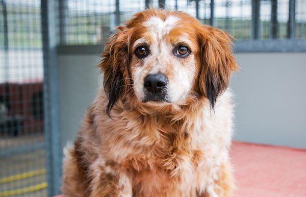 "Prosegue la campagna ""Bau Bau"" per l'adozione dei cani ospiti del canile"