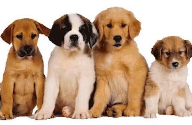 Pronta la prima area di sgambatura per cani, già previste altre due