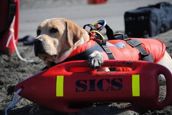 Attiva anche la Scuola Italiana Cani Salvataggio per una maggiore sicurezza balneare