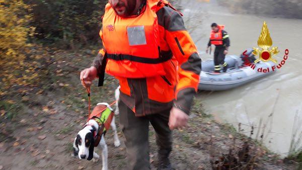 Acqua alta del Chiani, i Vigili del Fuoco recuperano due cani intrappolati
