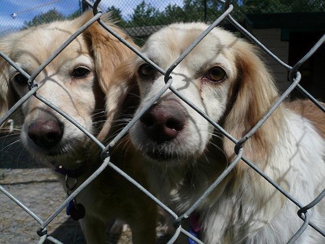 """""""Diamoci la zampa"""". Riprende la campagna per le adozioni canine"""