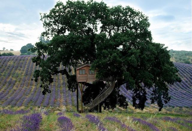 """""""La Casa sull'Albero"""". Due nuovi appuntamenti con il percorso sensoriale"""