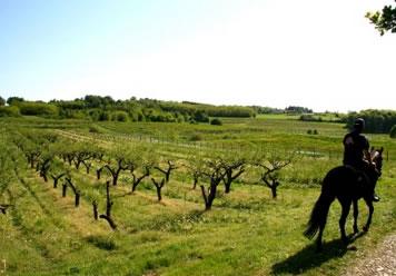 """Equitazione di campagna: """"Tre regioni, tre province, sei comuni"""". Porano e Castel Viscardo scelte come location ideali"""