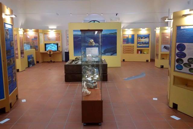Nuovo allestimento per il Museo dei Cicli Geologici. Quando in Umbria c'era il mare