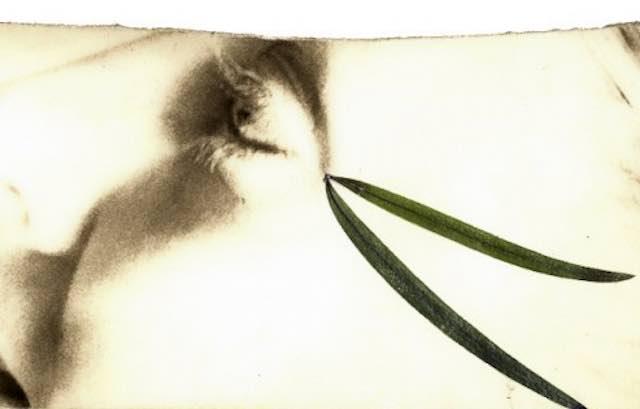 Verdecoprente, pubblicato il bando 2017. Spettacoli di residenza artistica in sei Comuni