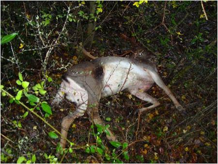 Violenza su animali protetti ad Allerona