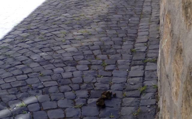 """Ancora deiezioni canine nelle vie della città. """"A quando i provvedimenti?"""""""