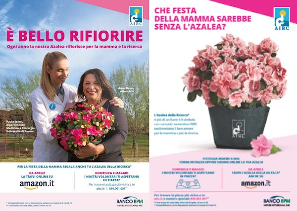 """Nel weekend torna in piazza l'Azalea della Ricerca. Con la Fondazione Airc """"È bello rifiorire"""""""
