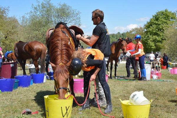 """Il Centro Ippico """"Wild Horse"""" ospita i Campionati Italiani di Endurance ANICA"""