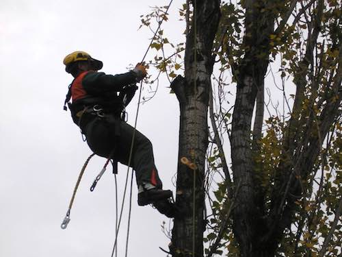 Enel al lavoro per migliorare la rete elettrica. Corrente sospesa a Castel Giorgio