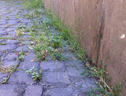 Taglio dell'erba nella zona di San Giovanni e Piazza Malcorini