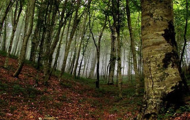 Faggete Vetuste Unesco, bandiera per la conservazione della natura in Europa. Unitus in prima linea