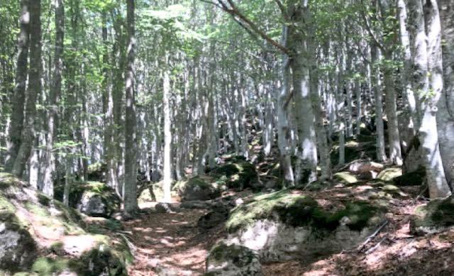 All'Amiata, aspettando l'autunno. Escursione montana con la Polisportiva