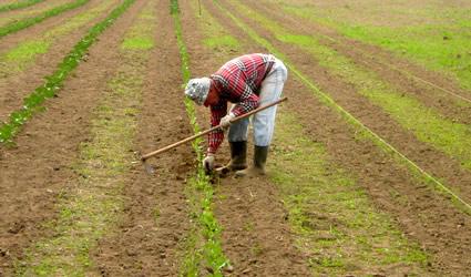Cura degli orti, il Comune di Bagnoregio scrive a Ministero dell'Interno e Regione Lazio