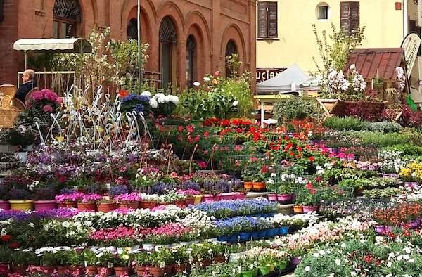 """""""Fiera Verde 2019"""". Tradizioni e sapori fanno fiorire il centro storico"""