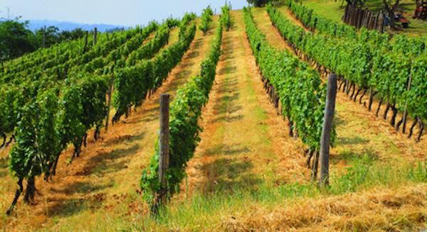Umbria, un anno d'oro per il vino. Al Borgo La Chiaracia una produzione di eccellenza