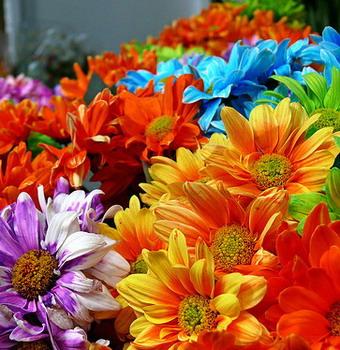"""Ad Allerona: """"I fiori nel piatto - Le erbe spontanee mangerecce, come riconoscerle, apprezzarle .. e mangiarli"""""""