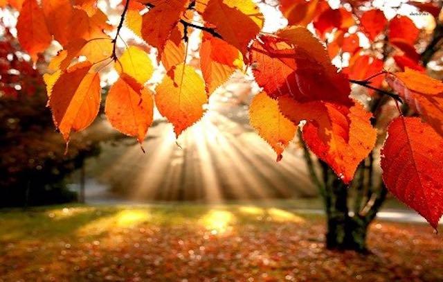 Del forse in questo autunno
