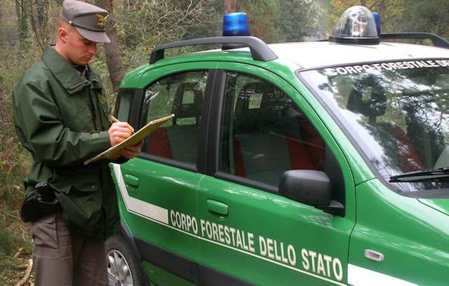 Tutela dell'ambiente, sinergia tra Carabinieri e Forestale per contrastare i reati