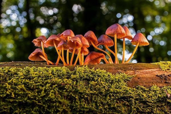 Quinta Mostra Micologica all'Orto Botanico. Tra laboratori, visite e consulenze