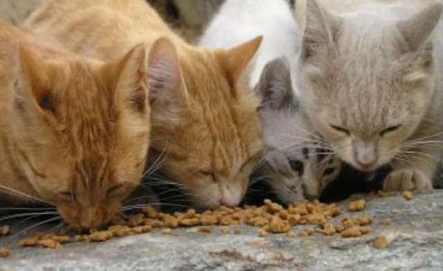 Sterilizzazione dei gatti randagi, il Comune cerca un ambulatorio veterinario