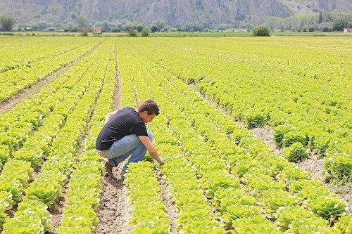 Giovani agricoltori, l'Umbria mette in vendita 135 ettari di terreni