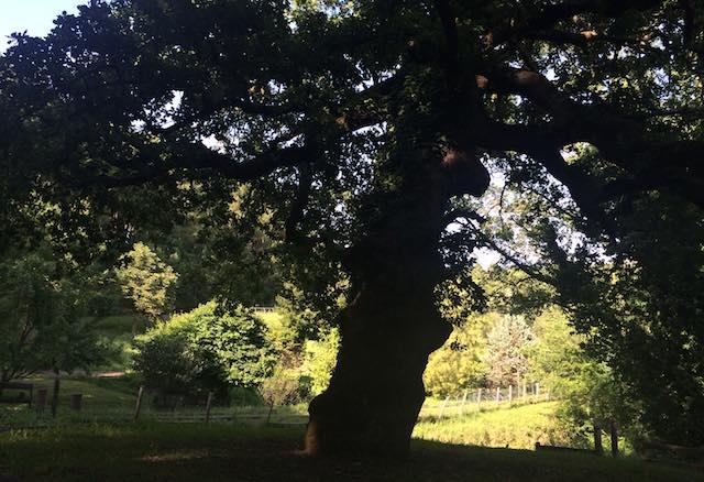 Giornata Nazionale degli Alberi. Tante iniziative e un impegno: fermare il consumo del suolo