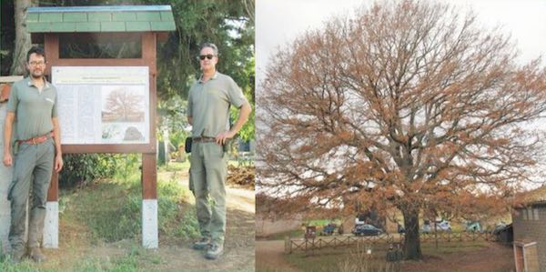 Alberi Monumentali, il Comune prende atto dei 47 esemplari presenti sul territorio