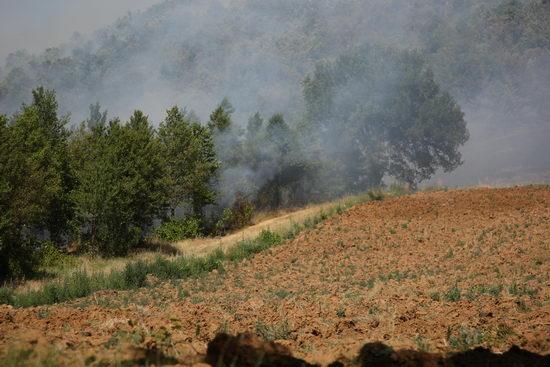 """Domato un vasto incendio verso Morrano. Il proprietario del terreno: """"Bisognerebbe prevenire con una diversa manutenzione del bosco ceduo"""""""