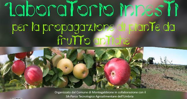 Montegabbione investe in biodiversità. Innesti per la propagazione di piante da frutto antiche