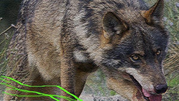 """""""Il lupo nel XXI secolo. Realtà, percezione e nuovi scenari"""""""