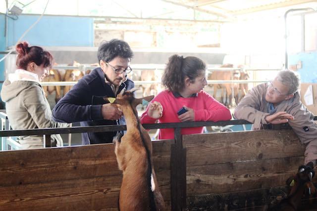 """Corso di """"Coagulazione lattica di latte caprino crudo aziendale"""" alla Fattoria Ma' Falda"""