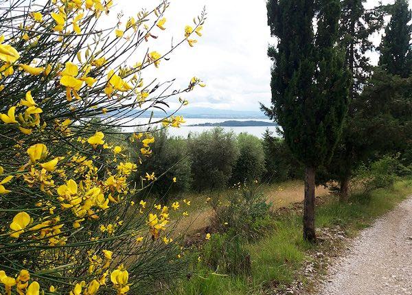 Escursione vista lago, costeggiando la Torre dei Lambardi